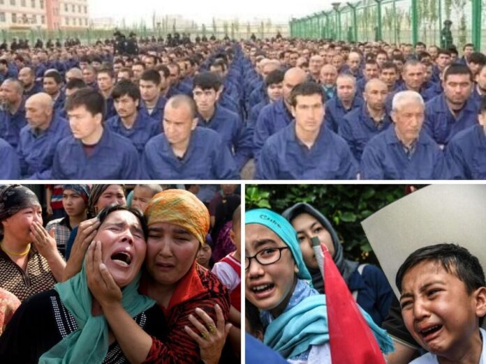 uighur genocide by china