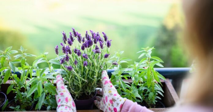 Guelph-Wellington Master Gardeners annual spring plant sale goes virtual for 2021
