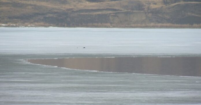 WSA working to raise low water levels in Last Mountain Lake ahead of summer