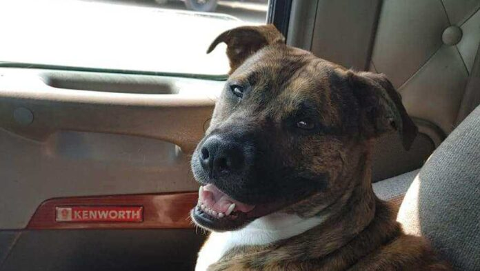 Fiery crash in southwest Iowa leads to international rescue mission for family dog