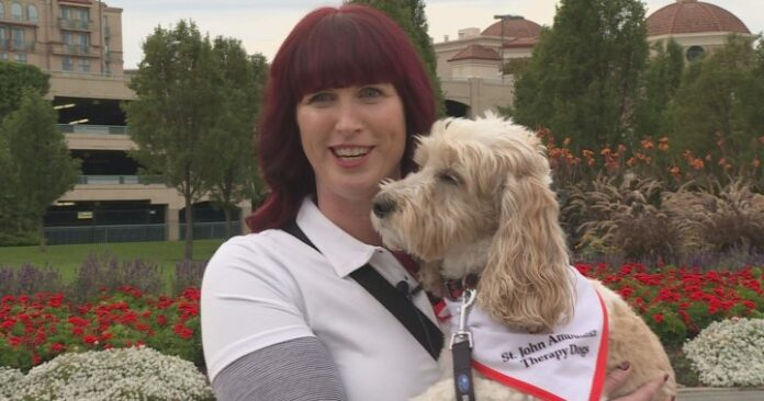 Therapy dogs visit North Okanagan COVID-19 vaccine clinic to help calm needle anxiety  | Globalnews.ca
